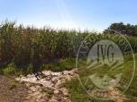 Immagine di Appezzamenti di terreno agricoli gravati da servitu' (come descritto in perizia).